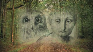 Faint image of an owl and mans face in the bush